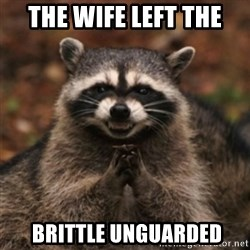 evil raccoon - The wife left the  brittle unguarded