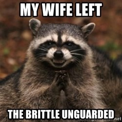 evil raccoon - My wife left  the brittle unguarded