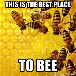 Honeybees - this is the best place to bee