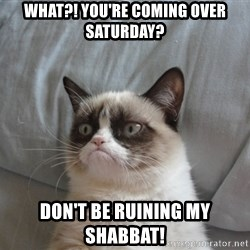 Grumpy cat good - What?! You're coming over Saturday? Don't be ruining my Shabbat!