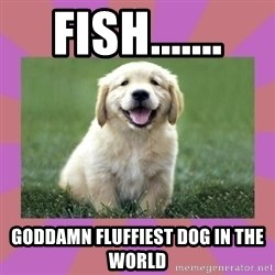 a level puppy - Fish....... Goddamn fluffiest dog in the world