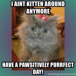 cute cat - I aint Kitten around anymore Have a pawsitively Purrfect day!