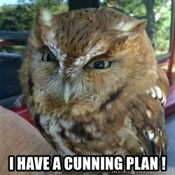 Overly Angry Owl -  I have a cunning plan !