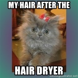 cute cat - my hair after the  hair dryer