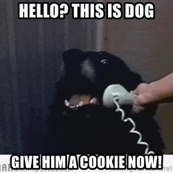 Hello This is Dog - Hello? this is dog Give him a cookie now!