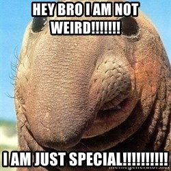 Lolwut - hey bro i am not weird!!!!!!! i am just special!!!!!!!!!!
