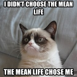 Grumpy cat good - I didn't choose the mean life The mean life chose me