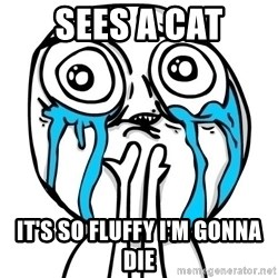 CuteGuy - sees a cat it's so fluffy i'm gonna die