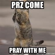Begging Cat - PRZ COME  PRAY WITH ME