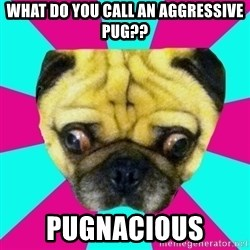 Perplexed Pug - what do you call an aggressive pug?? Pugnacious