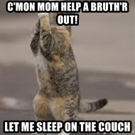 Begging Cat - C'mon Mom Help a bruth'r out! Let me sleep on the couch