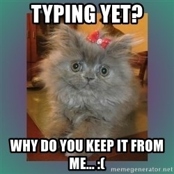 cute cat - TYPING YET? Why do you keep it from me... :(