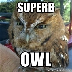 Overly Angry Owl - Superb Owl