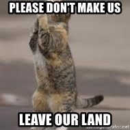 Begging Cat - Please don't make us  leave our land