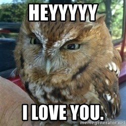 Overly Angry Owl - HeYYYYY I love you.