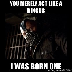 Bane Meme - You merely act like a Dingus I was born one
