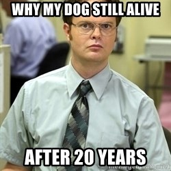 Dwight Shrute - why my dog still alive after 20 years