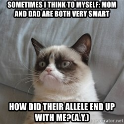 Grumpy cat good - sometimes I think to myself: mom and dad are both very smart how did their allele end up with me?(a.y.)