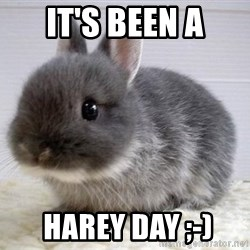 ADHD Bunny - it's been a  harey day ;-)