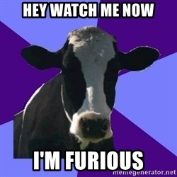 Coworker Cow - hey watch me now I'm furious