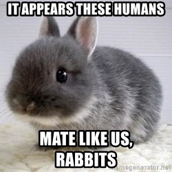 ADHD Bunny - it appears These humans mate like us,                        rabbits
