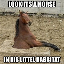 Hole Horse - look its a horse in his littel habbitat