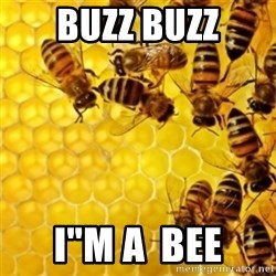 "Honeybees - Buzz Buzz I""m A  Bee"