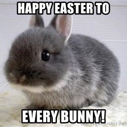 ADHD Bunny - happy easter to every bunny!