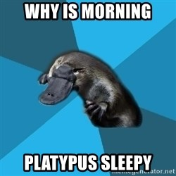 Podfic Platypus - why is morning platypus sleepy
