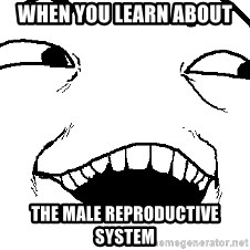 I see what you did there - When You Learn About  The Male Reproductive System