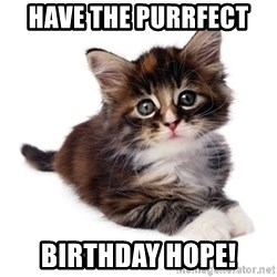 fyeahpussycats - have the purrfect  birthday hope!