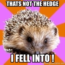 Homeschooled Hedgehog - Thats not the hedge I fell into !