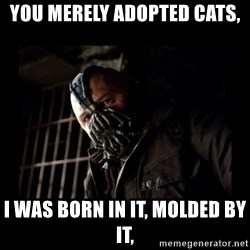 Bane Meme - You merely adopted cats, I was born in it, molded by it,