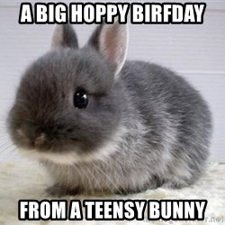 ADHD Bunny - a big hoppy birfday from a teensy bunny