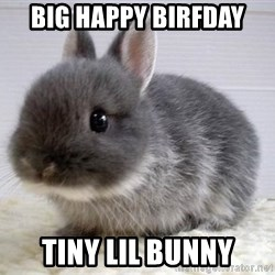 ADHD Bunny - big happy birfday tiny lil bunny