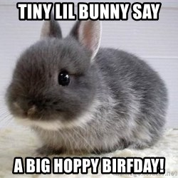 ADHD Bunny - tiny lil bunny say A big hoppy birfday!