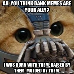 bane cat - Ah, you think dank memes are your ally? I was born with them. Raised by them. Molded by them.