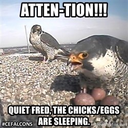 #CEFalcons - Atten-tion!!! Quiet Fred, the chicks/eggs are sleeping.