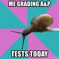 Synesthete Snail - ME GRADING A&P TESTS TODAY