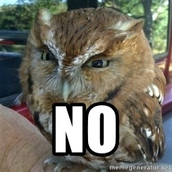 Overly Angry Owl -  NO