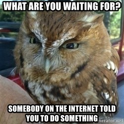 Overly Angry Owl - What are you waiting for? Somebody on the Internet told you to do something