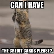 Begging Cat - CAN I HAVE THE CREDIT CARDS PLEASE?