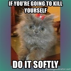 cute cat - If you're going to kill yourself Do it softly