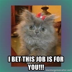 cute cat -  I bet this job is for you!!!