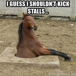 Hole Horse - I guess I shouldn't kick stalls...