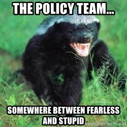 Honey Badger Actual - The Policy Team... somewhere between fearless and stupid