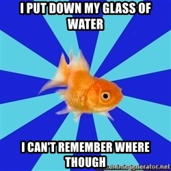 Absentminded Goldfish - i put down my glass of water i can't remember where though