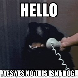 Hello This is Dog - Hello yes yes no this isnt dog