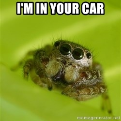 The Spider Bro - I'm in your car