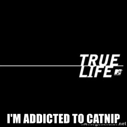 true life -  i'm addicted to catnip